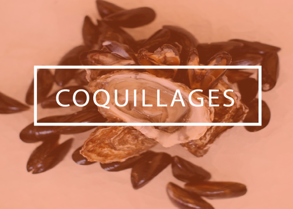 coquillages_2