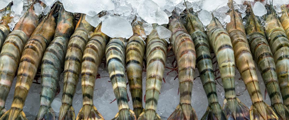 1-crustaces-sugeles